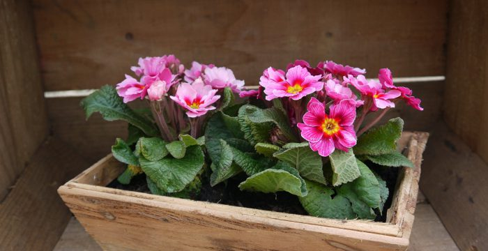 משלוח פרחים בגבעת שמואל